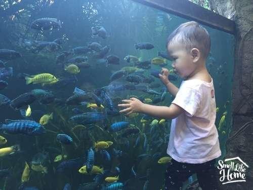 Fresh Water Aquarium Bali Safari Marine Park
