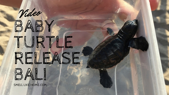 Baby Turtle Release in Bali