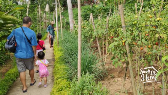 Sanggraloka Farm Plants